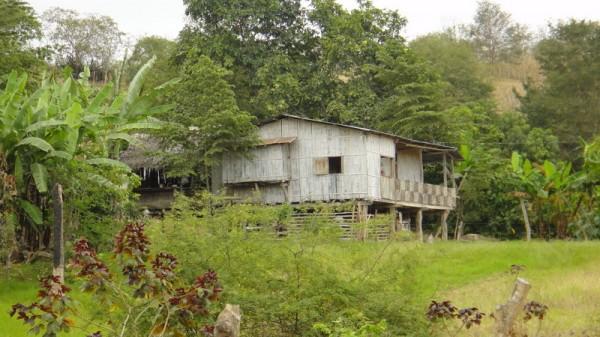 maison foret amazonienne