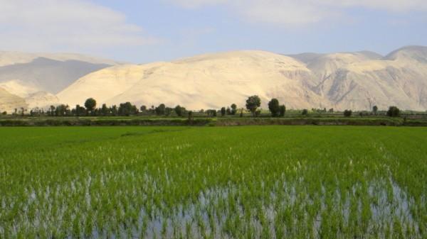 riziere et dunes