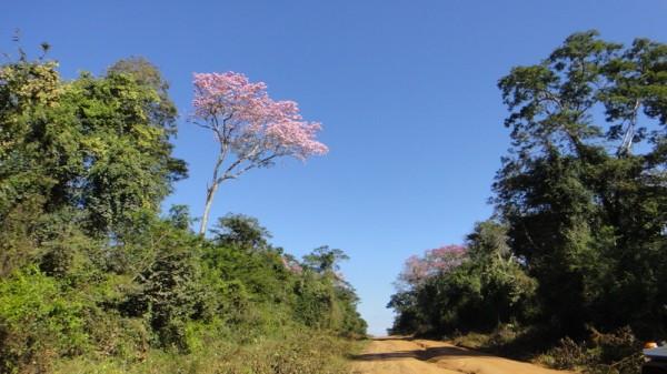 03-arbre en fleurs