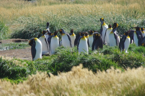 26-pingouins