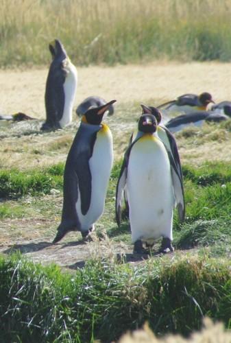 27-pingouins
