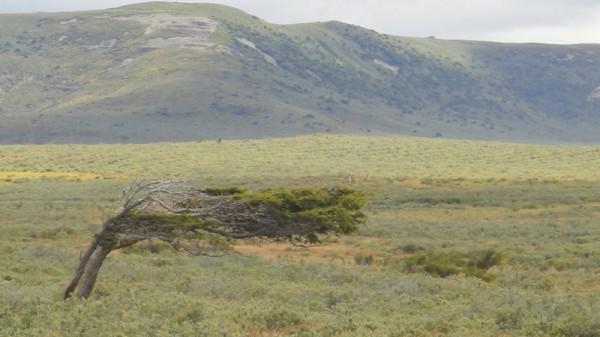 29-arbre au vent