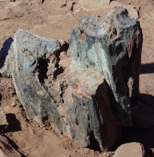 24- tronc avec traces de cuivre