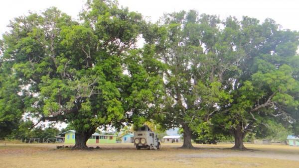 2-bivouac sous les manguiers