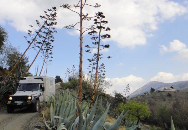 Entourés de fleurs de cactus