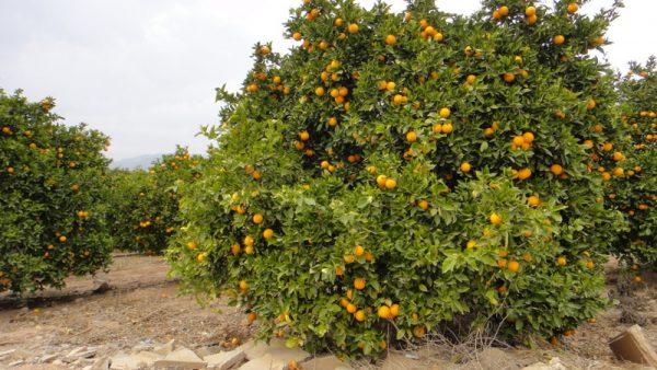 Que d'oranges !!!
