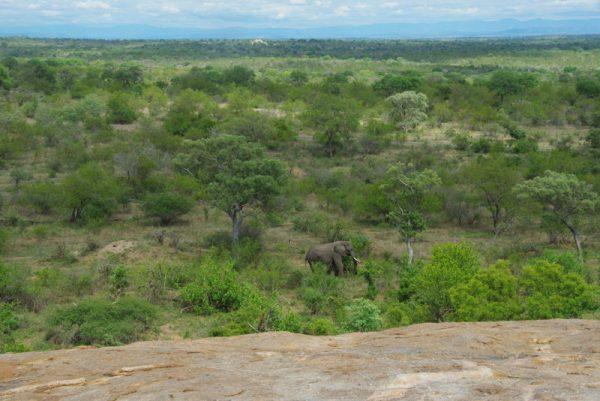 11 au parc Kruger