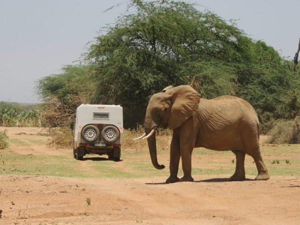13-éléphant pas content
