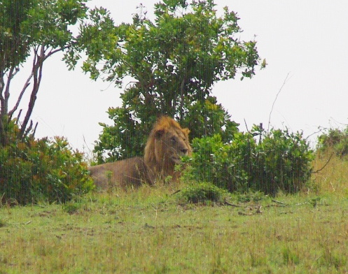 15-lion