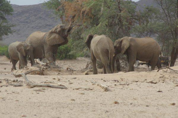 16 famille d'éléphants