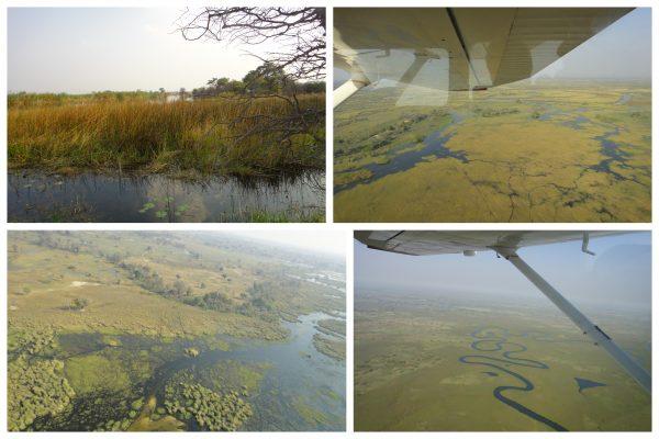 delta okawongo