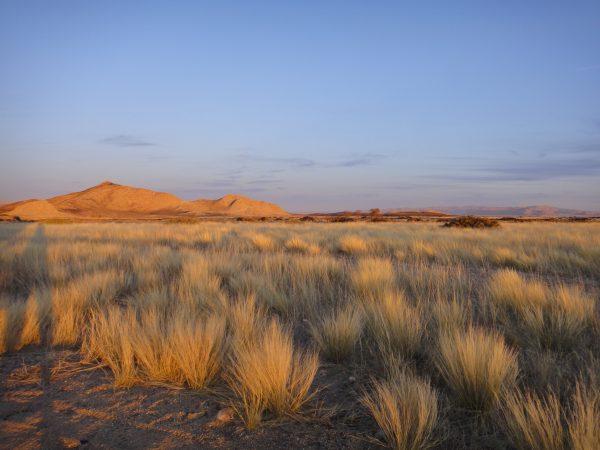 desert namib
