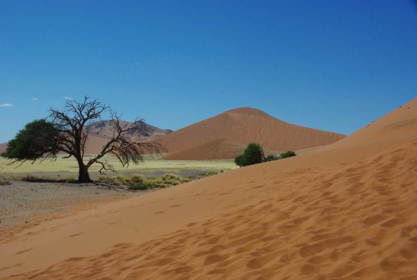 dune et arbre