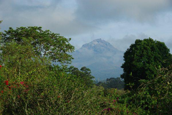 le mont Kilimandjaro