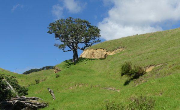 04-bel arbre