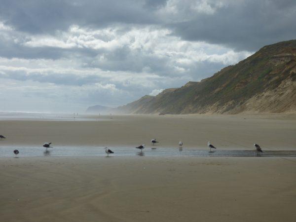 14- mer de Tasmanie et longue plage