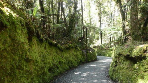 16-chemin taillé dans la forêt, lac Matheson